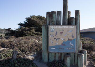 Monterey's Seventeen Mile Drive
